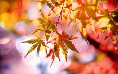 Why is Fall the Best/Worst Season?
